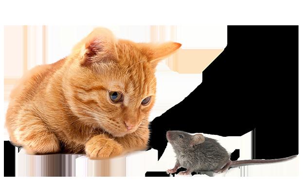 Leistungen für die Schädlingsbekämpfung im Allgäu