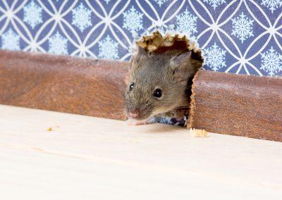 Mäuse