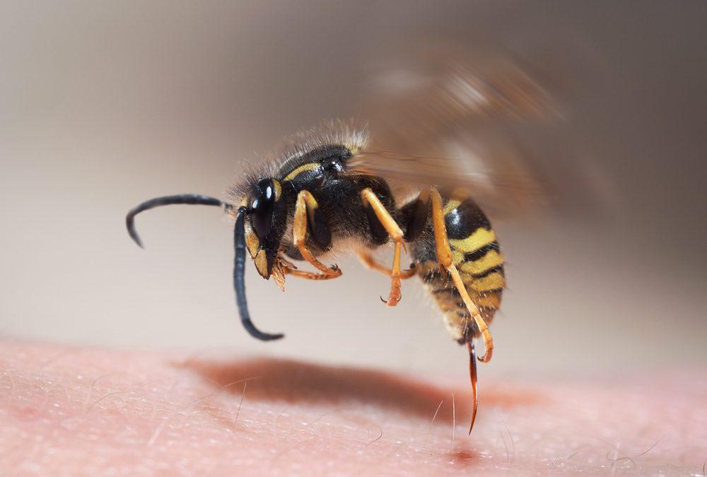 Wespenstich richtig behandeln